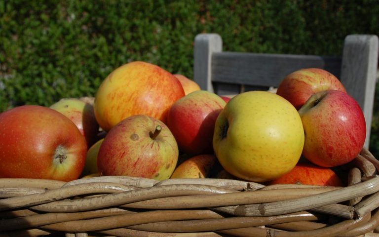 Apple close-up of LEVEL600 B&B Orchard