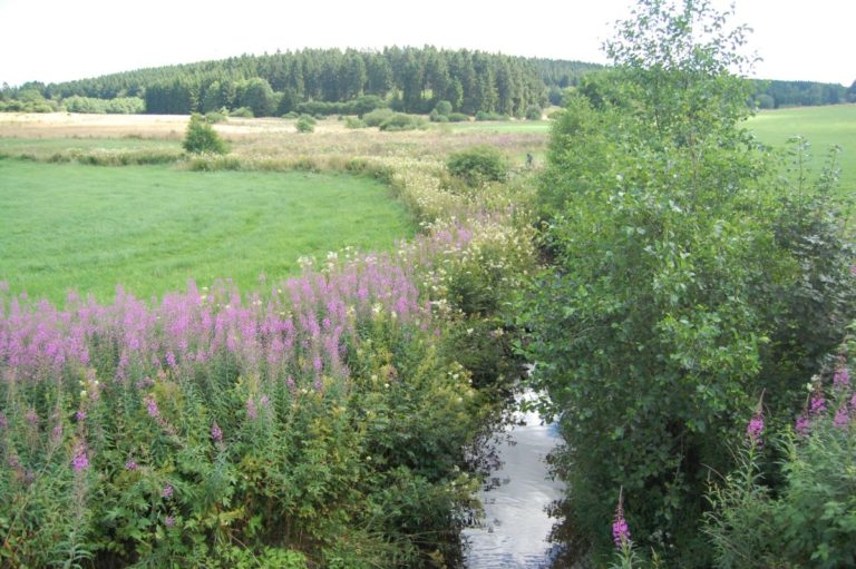 VIew on Wild Flower Warche Valley at feet of LEVEL600 B&B